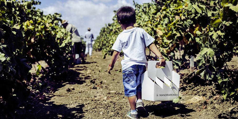 Vineyard Tour 2017 Mandrarossa. A Menfi tra mare e vigne