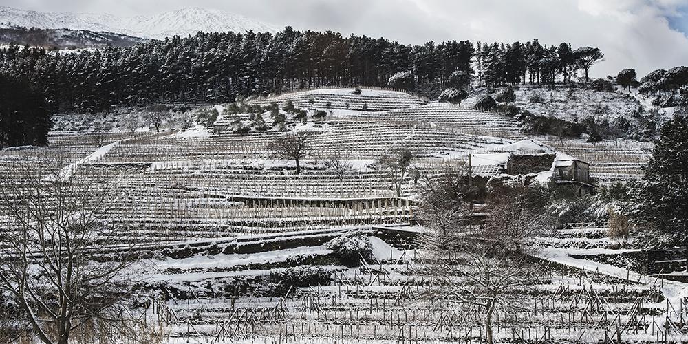 Alta Mora è l'azienda etnea di Cusumano. Nella foto contrada Guardiola