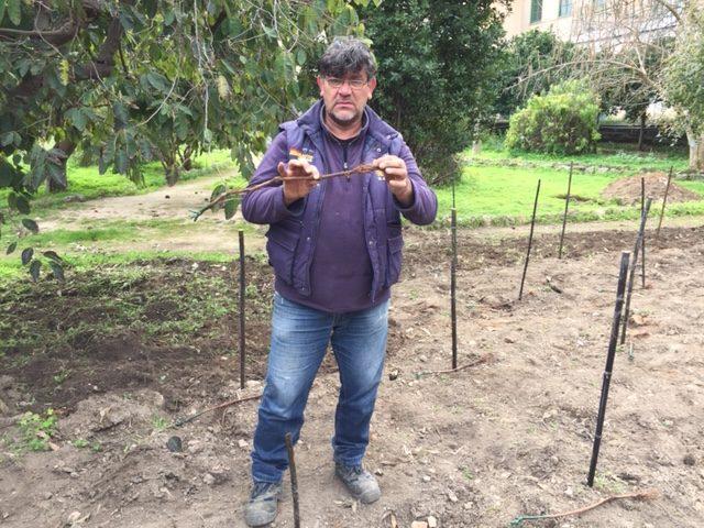 Orto botanico Vigna del Gallo. Tecnico con una barbatella in mano